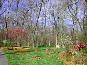 Red buds in a private burial area