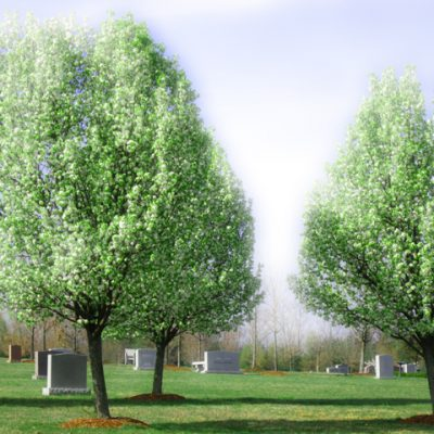 Pear trees at the Garden of Remembrance