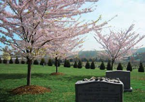 Spring at the Garden of Remembrance